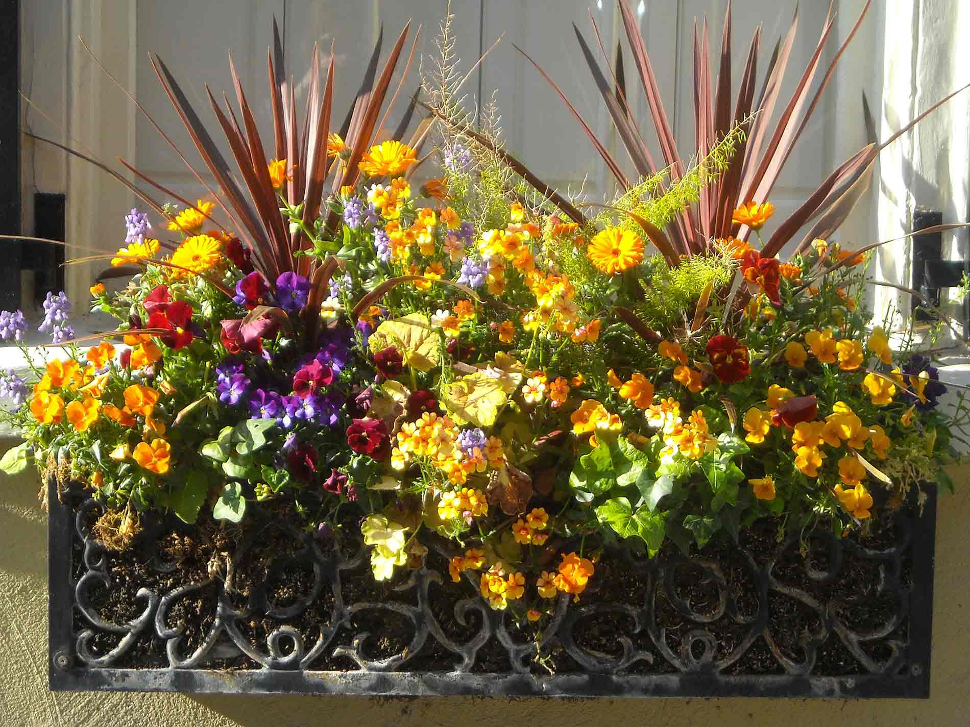 window box with grasses in back and flowers up front